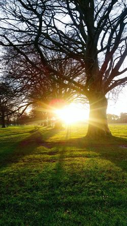 winter sun Tree Sunlight Sunbeam Grass Nature Lens Flare Field Beauty In Nature Scenics Tranquil Scene Outdoors Sun No People Tranquility