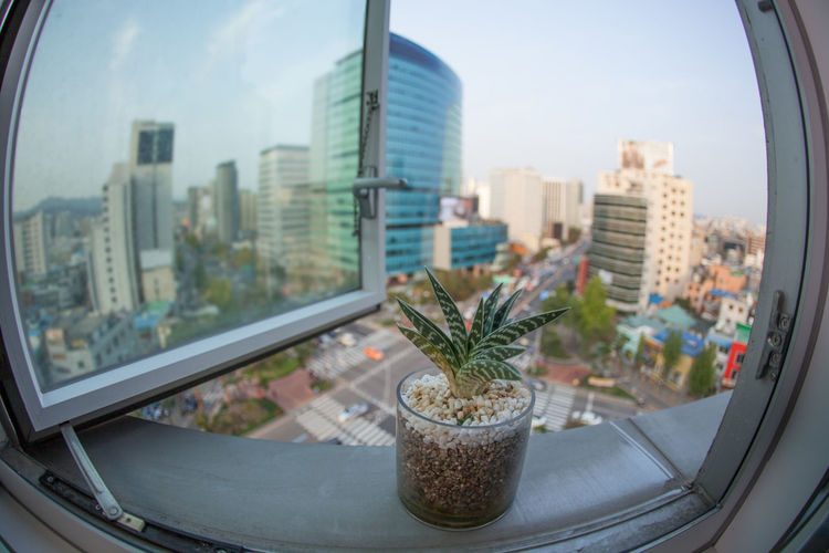 Wide angle shot of city view from the window with a house plant in foreground. Seoul, Republic of Korea Architecture ASIA Building Car City City Life Cityscape Day Highway Horizontal Metropolis Outdoors Plant Pot Road Seoul Skyscraper South Korea Transport Urban Urban Skyline