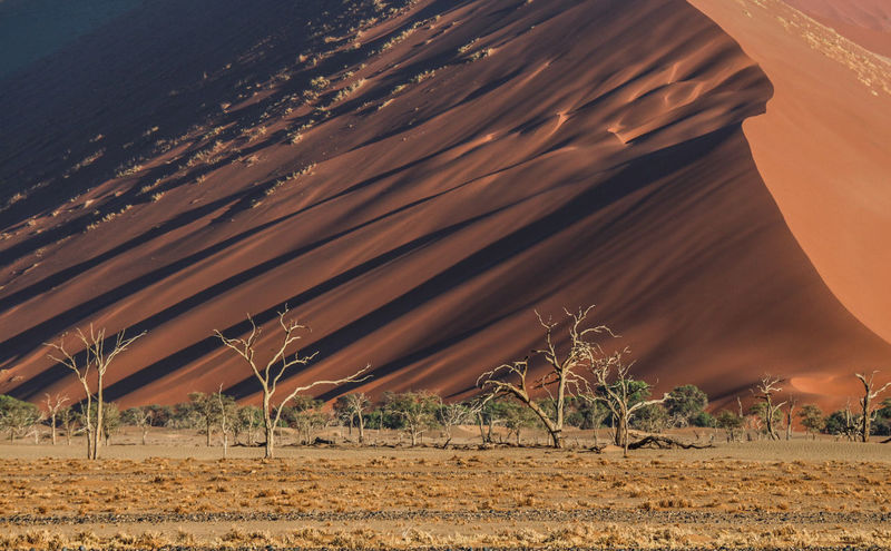 Dunes and trees - Namibia Dead Tree Namib Desert Namibia Namibia Landscape NamibiaPhotography No Sky Sossusvlei Africa Arid Climate Beauty In Nature Day Desert Dry Landscape Nature No People Orange Color Outdoors Sand Sand Dune Scenics Travel Destinations Tree