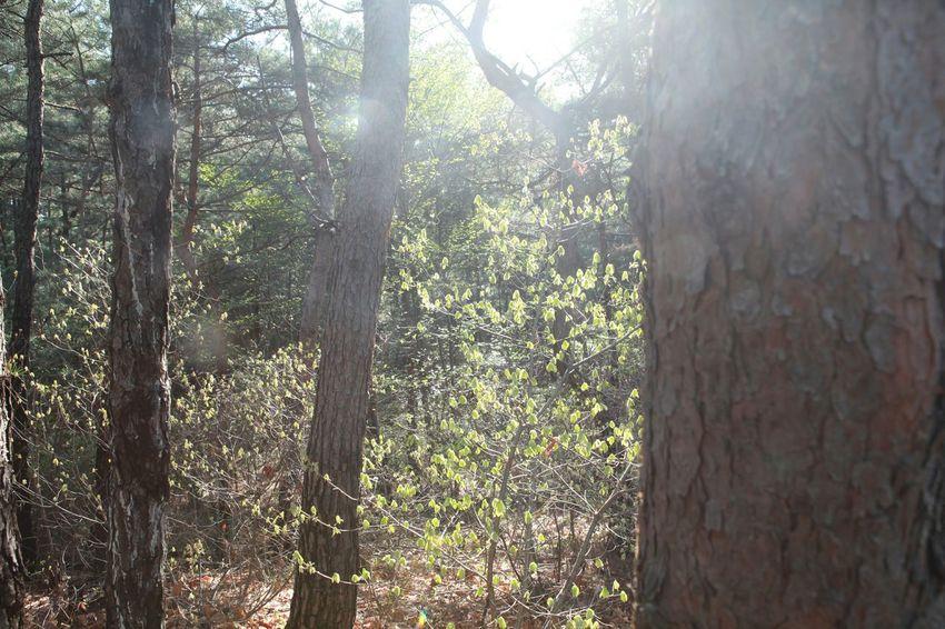 산님을담다   Light Shiny Moring Mountain Beautiful Nature 바른생태살림원   be the Nature