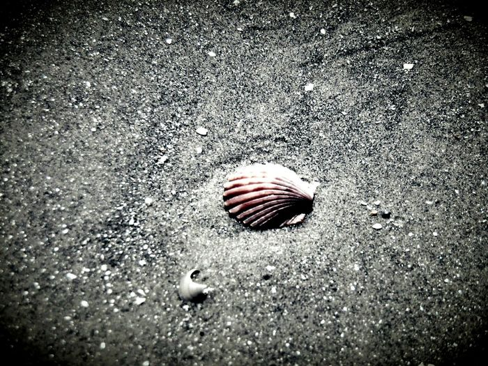 Lost Treasure Beach Shells Seashells Enjoying The Sun Tadaa Community Good Morning Check This Out Eye4photography  Malephotographerofthemonth Taking Photos