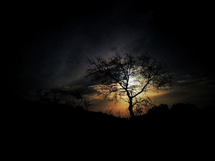 Silhouette bare tree against sky at night