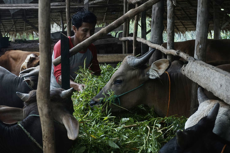 Horses in a farm