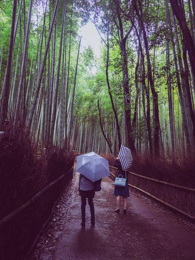Japan Bamboo -