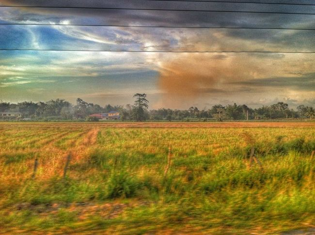 Paddy Field HDR Evening Sky