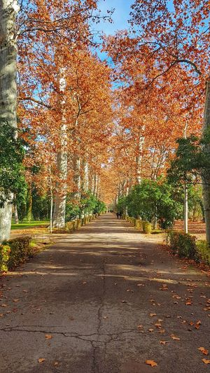 Jardín Del Príncipe, Aranjuez, Spain EyeEm Best Shots EyeEmNewHere EyeEm Nature Lover Eye4photography  EyeEmBestPics EyeEm Best Shots - Nature EyeEm Gallery Enjoying Life First Eyeem Photo Exceptional Photographs Thankful✨ Beauty In Nature Nature Nature_collection Low Angle View Landscape Scenics Scenics - Nature Autumn Autumn🍁🍁🍁 Tranquility Taking Photos Tranquil Scene Tree Road Sky Calm Idyllic Leaves