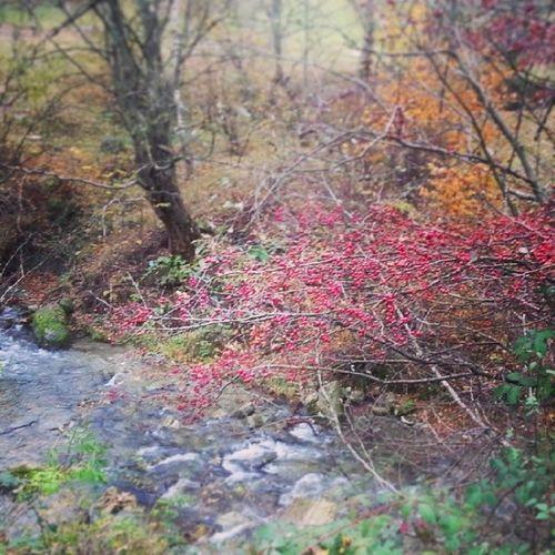 Wild Autumn Autumninromania Wood beautyfulcolors
