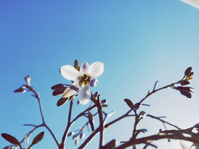 Flower Head Flower Tree Branch Clear Sky Springtime Blossom Sky Close-up Plant