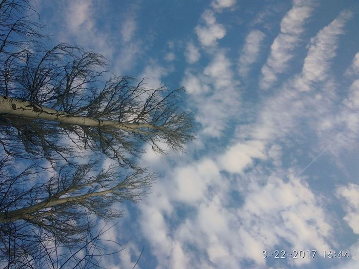 Clouds, tree and music. What a beautiful day Sky Tree Cloud - Sky No People Beauty In Nature Outdoors Blue Nature