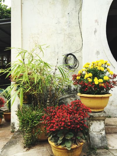 Vietnam Colorful Plants Flowers Red Green Yellow