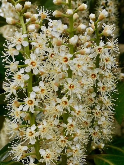 Flower Plant Flowering Plant Vulnerability  Growth Fragility Beauty In Nature Freshness White Color Nature Day Flower Head Outdoors Botany No People