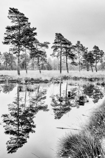 Trees Highkey Reflection Water Reflections Black And White Fineart