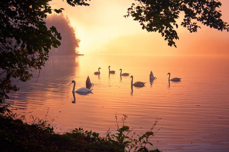 Birds Swimming In Lake During Sunset