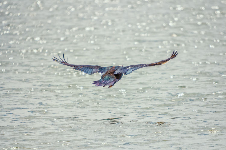 Water Flying