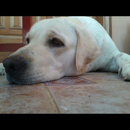 Esta perra vive durmiendo y jugando, como la quiero Dana  Love Loveanimals 😍😘❤🐶