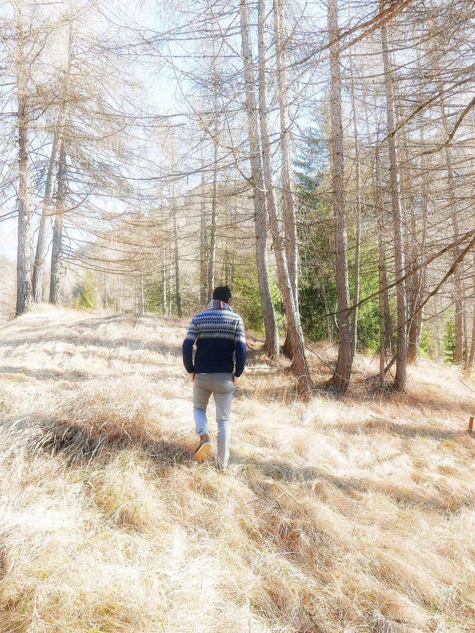rear view, real people, lifestyles, one person, walking, leisure activity, nature, full length, tree, day, beauty in nature, forest, outdoors, bare tree, sky, adult, adults only, people