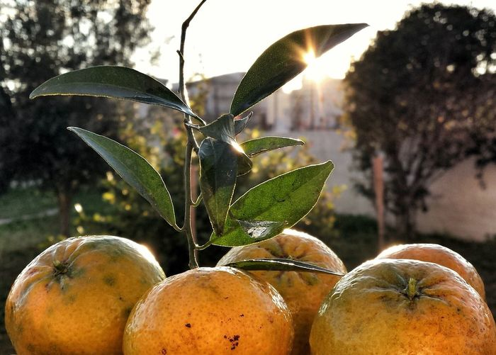 Taking Photos Getting Inspired Sicily Fruits Eat More Fruit Colorful Nature Sunset_collection Sunset Light Eating In Sicily My Elios Garden