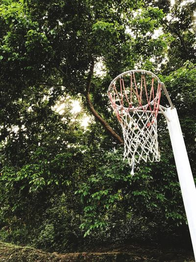 Tree Basketball Hoop Day Growth Outdoors No People Low Angle View Sport Nature Basketball - Sport