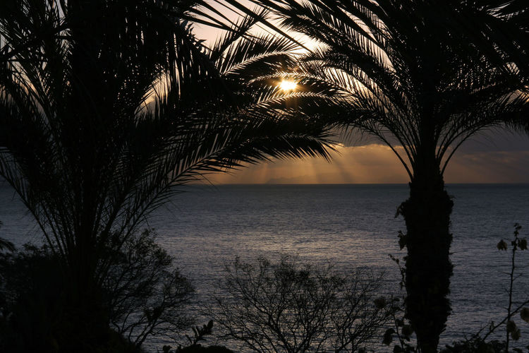 Beauty In Nature Horizon Over Water Madeira Nature No People Outdoors Palm Tree Palm Tree Scenics Sea Silhouette Silhouette Sky Sunset Tranquility Travel Tree Trees Water Mix Yourself A Good Time