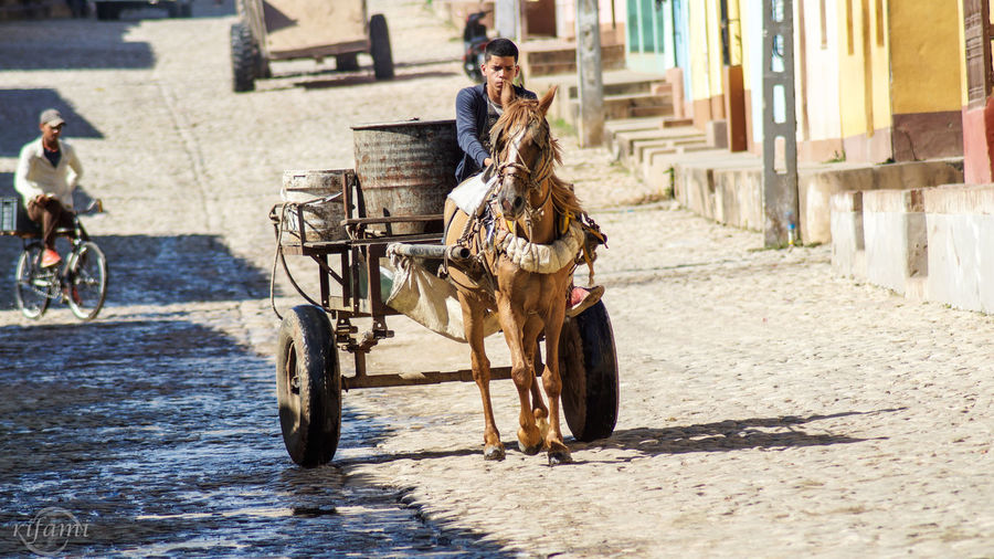 Trinidad/Kuba Sooo niceMode Of Transport Transportation Lifestyles Sitting Outdoors People Day Kuban Lovephotography  Photooftheday Photos Horse Horselife Picoftheday Pic Photographylovers