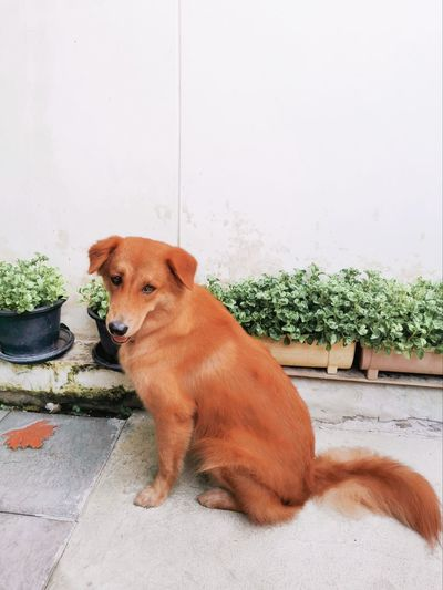 Dog looking away while sitting on potted plant