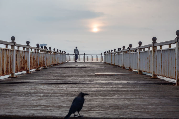 A Sri Lankan man standing on a pier in Colombo looking out into the distance. Sky Vertebrate Bird Animal Themes Railing Animal The Way Forward Sunset Animals In The Wild Animal Wildlife Nature Direction Pier Connection One Animal Bridge Real People Perching Architecture Outdoors Diminishing Perspective Colombo Sri Lanka