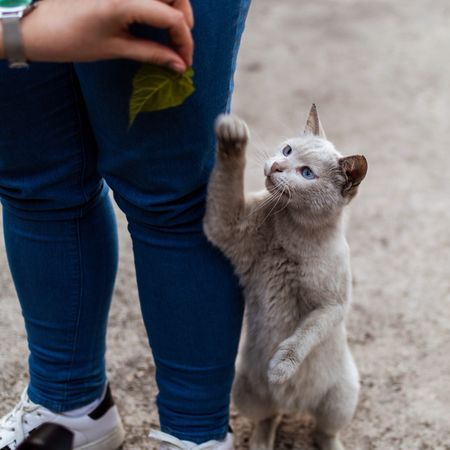 Cat II Türkiye Turkey Mersin Cute Cat Mammal One Person Pets Domestic One Animal Domestic Animals Real People Childhood Pet Owner Leisure Activity Casual Clothing Standing Hand Vertebrate Human Body Part Midsection Child Jeans Care Human Limb The Portraitist - 2018 EyeEm Awards