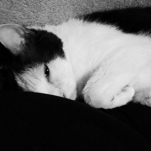 Capture The Moment Blackandwhite Ilovemyrescue Cats