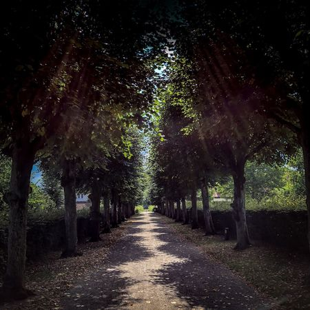 Shadows Tree Direction The Way Forward Plant Treelined Footpath No People Tree Direction The Way Forward Plant Treelined Footpath No People Nature Diminishing Perspective Growth Tranquility Tranquil Scene vanishing point Road Beauty In Nature Day Transportation Trunk Tree Trunk Scenics - Nature