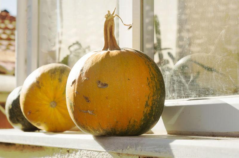 Pumpkins Food Freshness Healthy Eating Orange Outdoors Pumpkin Pumpkin Carving Reflection Round Tasty Vegetable Vegetation Window Window Ledge