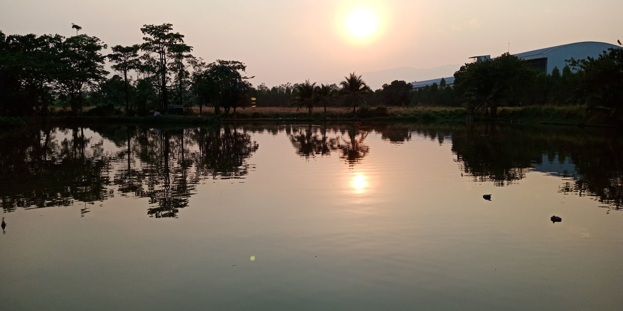 Tree Water Sunset Bird Lake Silhouette Sun Reflection Sky Landscape