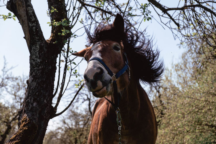 Low Angle View Of Horse Against Trees