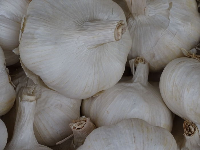 Backgrounds Close-up Food Food And Drink Freshness Full Frame Garlic Garlic Bulb Healthy Eating High Angle View Indoors  Ingredient Large Group Of Objects No People Raw Food Spice Still Life Vegetable Wellbeing White Color
