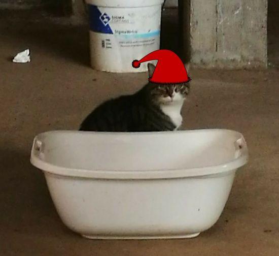 gatto natale Domestic Bathroom Taking A Bath Washing Hygiene Domestic Room Bathroom Adult Day