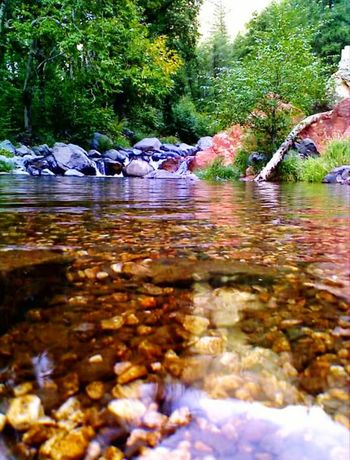 Oak Creek Sedona, Az Water Tranquility Reflection Tree River Nature Outdoors Beauty In Nature Forest Scenics Sky No People Day