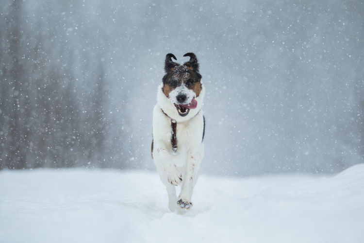 Snow Winter Dog
