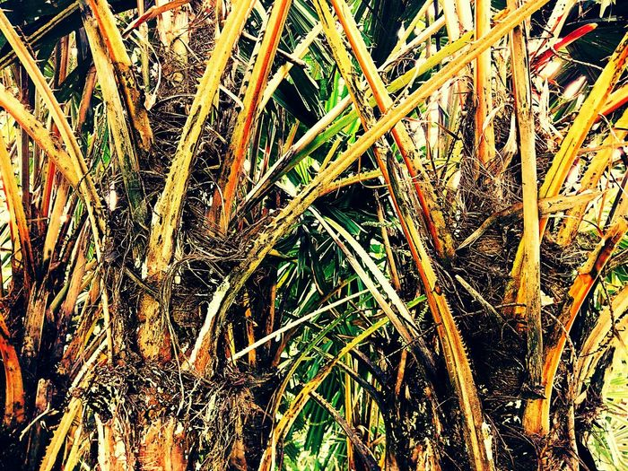 Tree Tree Photography Tree_collection  Trunk Tree Trunk Tree Trunk Collection Tree Trunk Art Close Up Trunk Nature Beauty Of Nature Nature Photography Tree Colors Tree Art Tree Abstract Nature Abstract Nature Art Tree Color Of Tree Close Up Photography Vintage Vintage Tree Vintage Photography Vintage Tone ใน Bangkok, Thailand