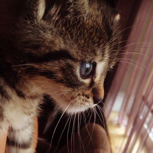 Kitty Kitty Love My Kitty <3 Beautiful Milka Fall In Love ♡ Zakochana ❤️❤️❤️