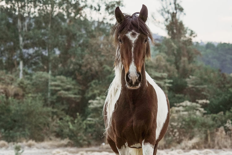 Portrait of horse in ranch