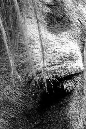 Close-up of an animal eye