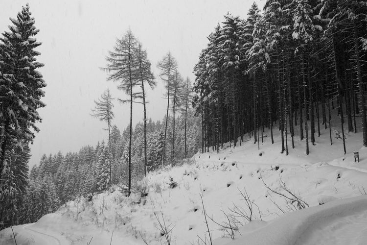 Black And White Black Forest Bw Dark Forest Grey Hiking Landscape Light Nature Path Ski Touring Snow Snowfall Winter