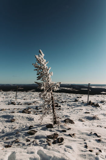 Clear sky and -20°C Cold Temperature Sky Clear Sky Nature Winter Beauty In Nature Plant Snow Tranquil Scene Tranquility Land Scenics - Nature Tree No People Day Field Blue Non-urban Scene Landscape Outdoors EyeEm Nature Lover EyeEm Best Shots