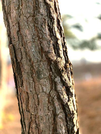 낮 야외 껍질 나무 EyeEm Selects Trunk Tree Trunk Focus On Foreground Tree Close-up Textured  Nature Rough No People Outdoors Plant Wood - Material Brown