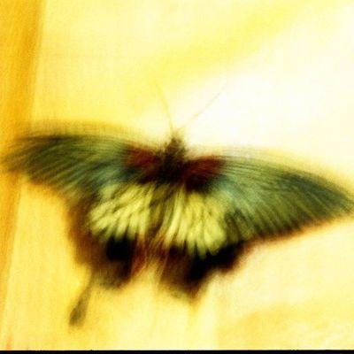 Яркие акценты вашего интерьера - фото 45*45 см. цветныекартинки Film Filmfoto 35mm Analogphotography Art Photoart Decor Design Butterfly