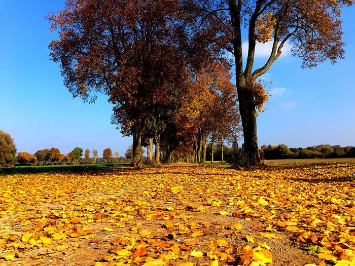Herbst in Bayern Plant Tree Growth Field Sky Nature Beauty In Nature