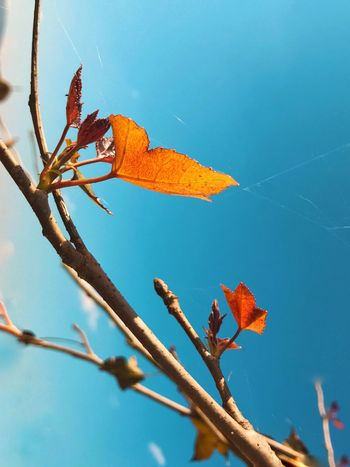 EyeEm Selects Plant Nature Tree Sky Day Beauty In Nature Growth Animals In The Wild Leaf Fragility Outdoors Blue Plant Part Close-up No People Low Angle View Sunlight Branch Vulnerability  Twig