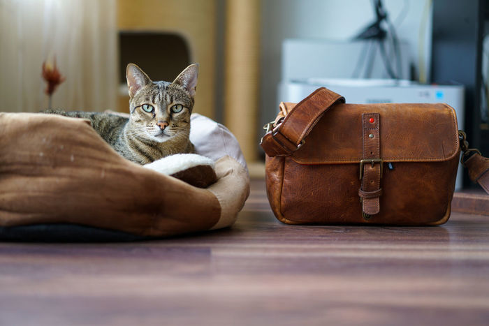 Wanda with the ONA Bowery Leica Edition camera bag Alertness Animal Head  Animal Themes Bag Bowery Cat Close-up Comfortable Curiosity Depth Of Field Domestic Animals Domestic Cat Feline Home Indoors  Mammal Ona One Animal Part Of Pets Portrait Relaxation Relaxing Selective Focus Sitting