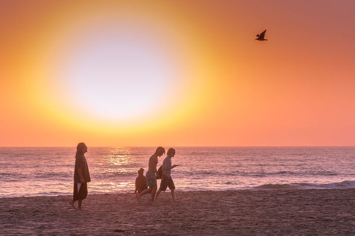 Adult Animal Themes Beach Beauty In Nature Bird Day Flying Horizon Over Water Leisure Activity Nature Outdoors People Sand Scenics Sea Silhouette Sky Sun Sunset Togetherness Vacations Water