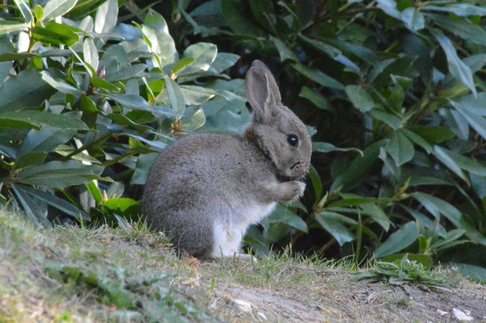 One Animal Animals In The Wild Mammal Animal Wildlife No People Nature Close-up No Edit, No Filter, Just Photography Nikon D3200 Nature Cute Rabbit Wild Rabbit British Countryside
