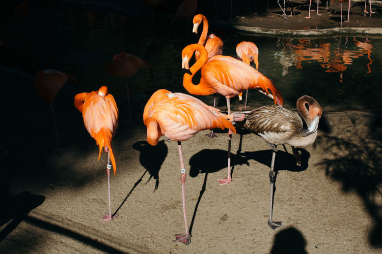 Zoo Animal Themes Animal Wildlife Bird Flamingo Large Group Of Animals Nature Outdoors Zoophotography